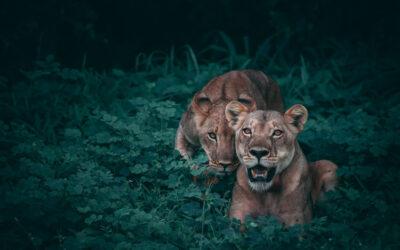 Do humans have modern-day predators?